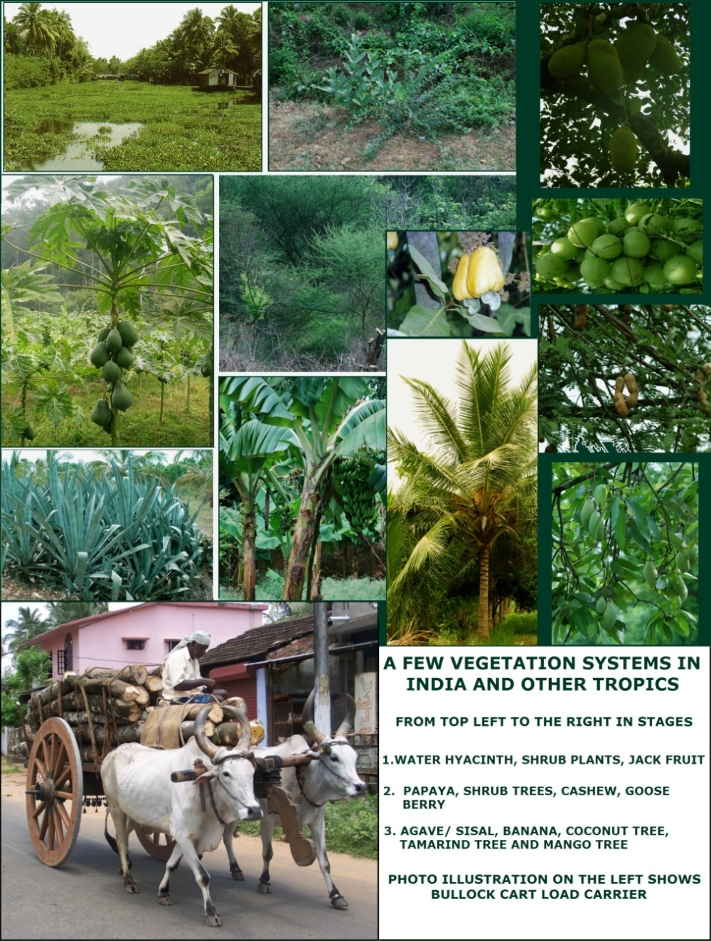 Various Plants and Vegetation systems useful for Conversions in Village areas